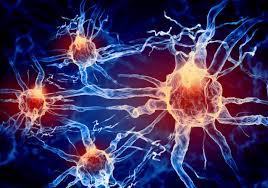 neironu-saites